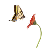 butterfly-and-flower