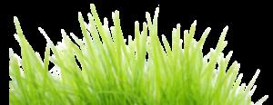 grass-1-1
